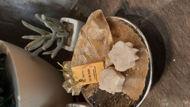 Image de Sel de bain naturel à l'huile de Lentisque pure et aux clous de girofles
